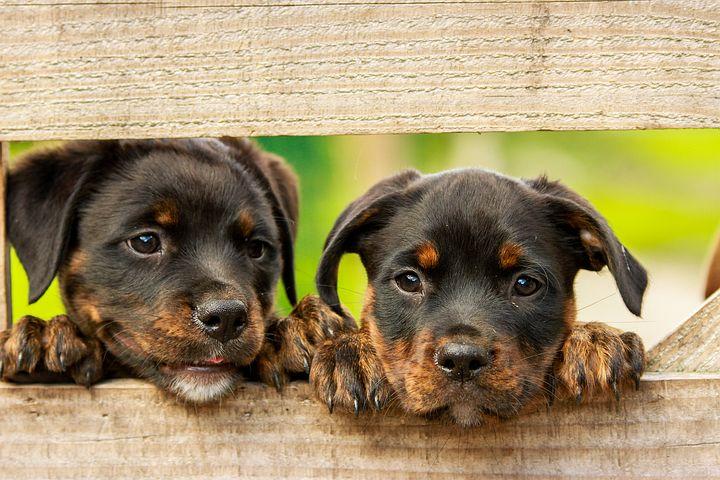 Sterylizacja zwierząt – fakty i mity